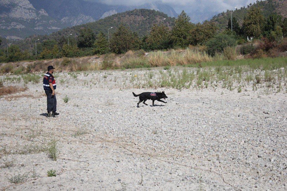 633 Gündür Kayıp Olan Buse İçin Köpekli Arama