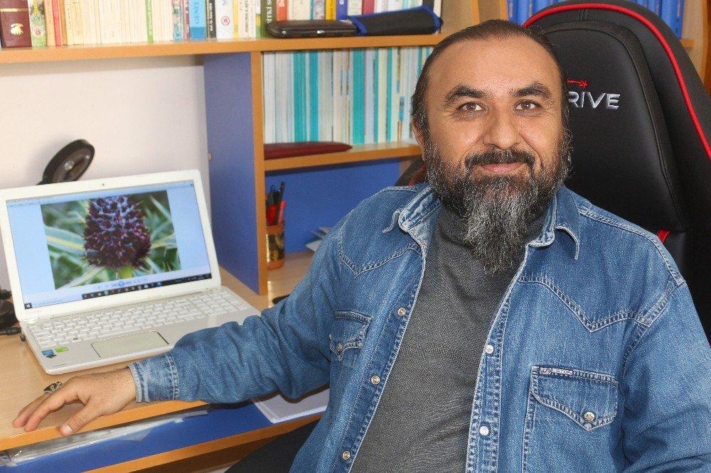 Bilim Literatürüne 'Anatolia' Adında Alt Cins Bitki Kazandırıldı